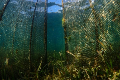 Seagrass meadows globally are fished on a daily basis for food provision. Such meadows are in rapid decline and actions are needed to stem the loss. Photo: Benjamin Jones
